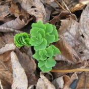 Date: 2010-03-24First leaves of spring