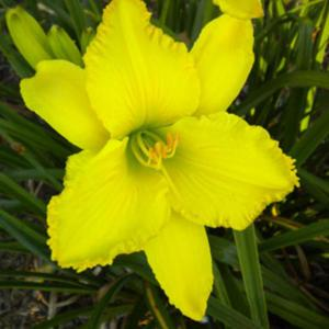Photo courtesy of Riverbend Daylily Garden