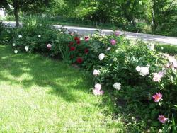 Thumb of 2012-03-01/doglover/a4890e