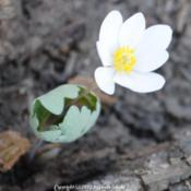 Location: Natural Area in Northeastern IndianaDate: 2012-03-17