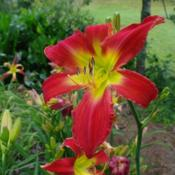 Date: 2011-08-05Photo Courtesy of Nova Scotia Daylilies Used with Permission