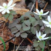 Location: Natural Area in Northeastern IndianaDate: 2012-03-18