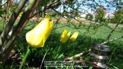 Thumb of 2012-03-27/flowersrjen/d6643e