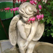 Location: At a local nurseryDate: 2012-03-28Playing peek-a-boo through the bleeding heart.