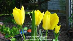 Thumb of 2012-03-31/flowersrjen/be62e2