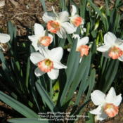 Location: My garden in KentuckyDate: 2012-03-18