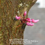 Location: My garden in KentuckyDate: 2012-04-01