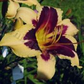 Location: Squire Gardens, central Ohio, zone 5/6Date: 2004Photo © Squire Gardens