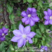 Location: VirginiaDate: 2012-04-092012 First blooms