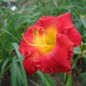 Date: 2003-08-07Photo Courtesy of Nova Scotia Daylilies Used with Permission