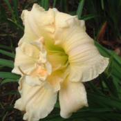 Photo Courtesy of Nova Scotia Daylilies Used with Permission