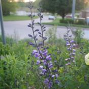 Location: My garden in southeast NebraskaDate: 2012-04-23