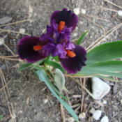 Location: Pleasant Grove, UtahDate: 2012-04-27In my garden