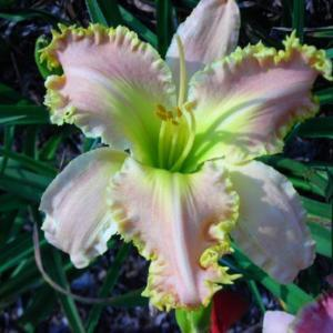 Photo Courtesy of Wonderland of Daylilies Used with Permission