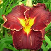 Date: 2007-05-10Photo Courtesy of Wonderland of Daylilies Used with Permission