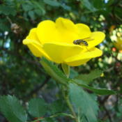 Location: Pleasant Grove, UtahDate: 2012-05-04With bee, wasp, hornet?