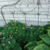 Location: In my garden.....Pleasant Grove, UtahDate: 2012-05-06with antique bed headboard and other shade plants