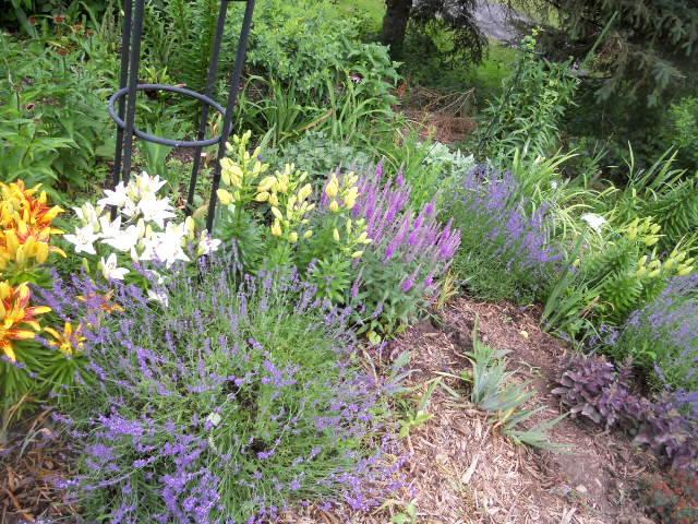 Perennials forum Help me decide what to plant with