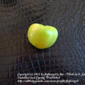 Location: zone 8 Lake City, Fl.Date: 2012-05-06fruit with the husk removed