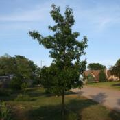 Location: My yard in southeast NebraskaDate: 2012-05-23