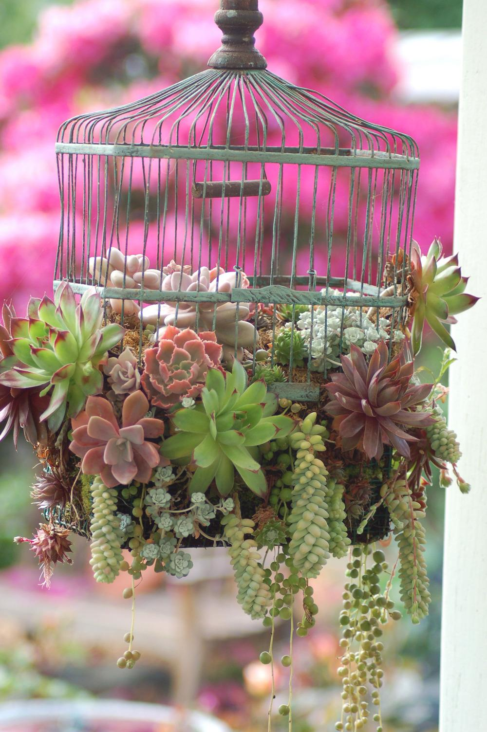 50+ Succulents, Terrariums and Creative Planters