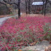 Location: Molly Hollar Wildscape Arlington, Texas.Date: 2012-01-25A lovely group of plants.