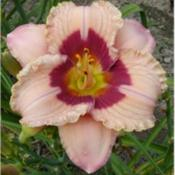 Photo Courtesy of Homestead Farms Nursery. Used with Pe