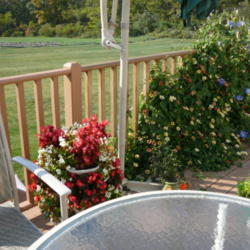 Thumb of 2012-06-17/Roses_R_Red/d6ebff