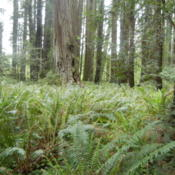 Location: Redwood National Park, CaliforniaDate: 2011-05-22