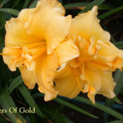 Photo Courtesy of Crossview Gardens. Used with Permissi