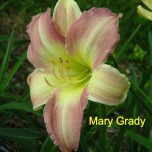 Photo Courtesy of Crossview Gardens. Used with Permission.