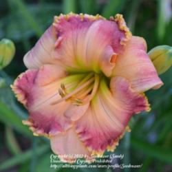 Thumb of 2012-06-30/Seedsower/424311