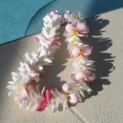 Location: Southwest FloridaDate: July 2012Lei made of about 75 plumeria flowers...