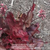 Location: Wilmington, DEDate: 2012-07-31Summer Foliage.