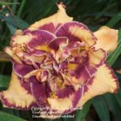 Date: 2012-06-22Courtesy of Peace on Earth Gardens Used with permission