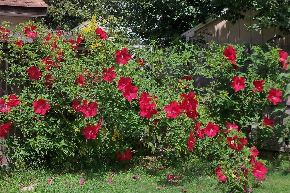 Perennials Forum What Has Been Your Most Heat And Drought