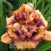 Photo Courtesy of Centerpiece Gardens. Used with Permis