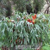 Location: Daytona Beach, FloridaDate: 2012-08-22 Photo taken at Sugar Mill Botanical Gardens, Port Orang