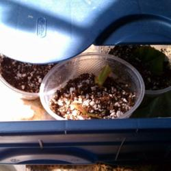 Thumb of 2012-08-27/ShadyGreenThumb/9f9bdf
