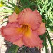 Location: My garden in northeast TexasDate: 2012-05-06