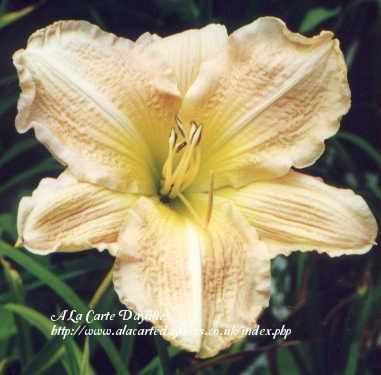 Photo of Daylily (Hemerocallis 'Pastel Ballerina') uploaded by Joy