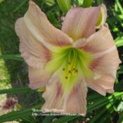 Photo courtesy of Briscos' Best Blooms. Used with permission.