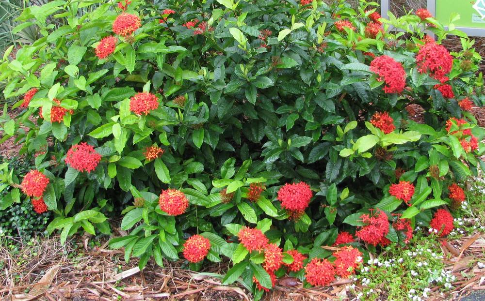 Jungle Flame - Flowers That You Can Easily Grow In Your Backyard