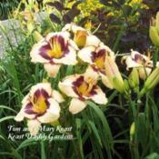 Photo Courtesy of Keast Daylily Gardens. Used with Permission.