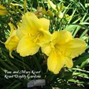 Photo Courtesy of Keast Daylily Gardens. Used with Perm