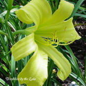 Photo Courtesy of Daylilies by the Lake. Used with Permission.