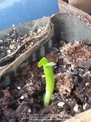 Thumb of 2012-10-02/ShadyGreenThumb/091a1a