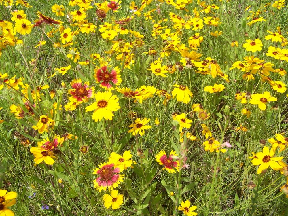 Fall tip plant wildflower seeds - Gardening in fall ...