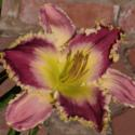 Growing and Photographing Daylilies in Sunny Regions