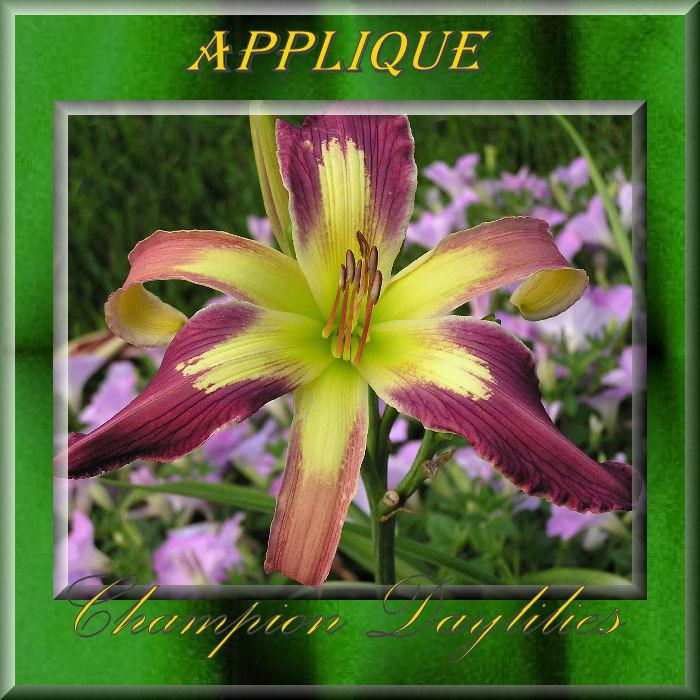 Photo of Daylily (Hemerocallis 'Appliqué') uploaded by Joy